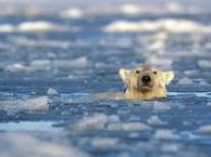 Kylmien vesien uimari
