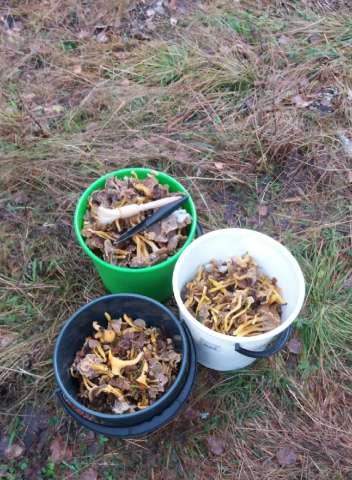 Sieniretkeä varjosti tietomurtouutinen